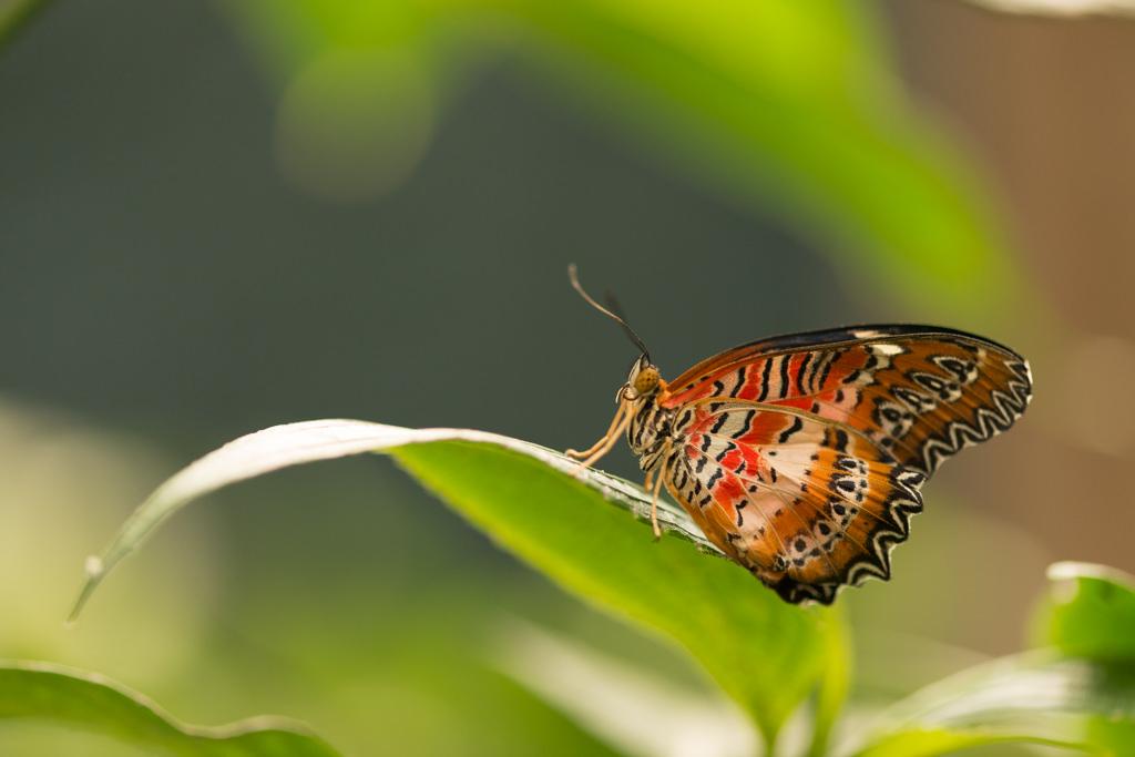 Bild ohne Polfilter - Schmetterlinge fotografieren