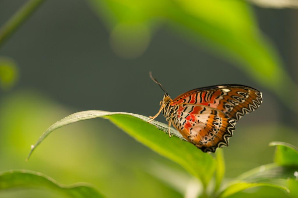 Mit Polfilter - Schmetterlinge fotografieren